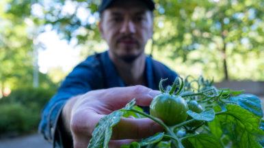 Urbaania viljelyä kehitetään kaupunkilaisten kanssa