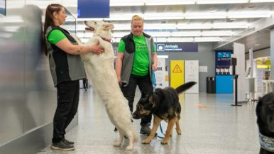 Corona detection dogs begin their work at Helsinki-Vantaa airport