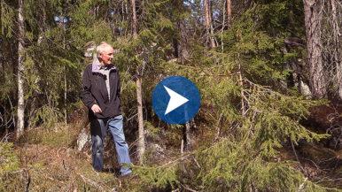 Metsän lumoa – muistoja Sotungin metsistä