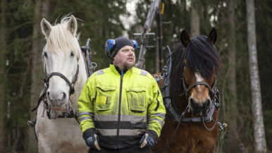 Hevosilla homma hoituu