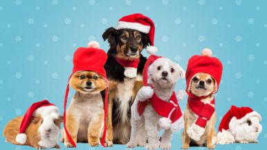 Haussa joulun söpöin eläintähti – kuvaa lemmikkisi Vantaan joulukalenteriin!
